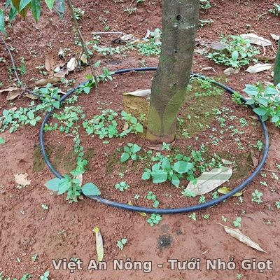 dây tưới nhỏ giọt quấn gốc 12mm hydrogol việt an nông