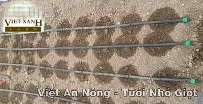 dây nhỏ giọt 16mm hàn quốc việt an nông