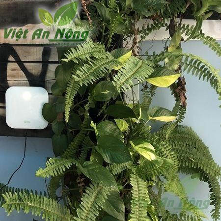 Hộp điều khiển tưới cây wifi tự động 6 kênh Netro Spite - Mỹ 5