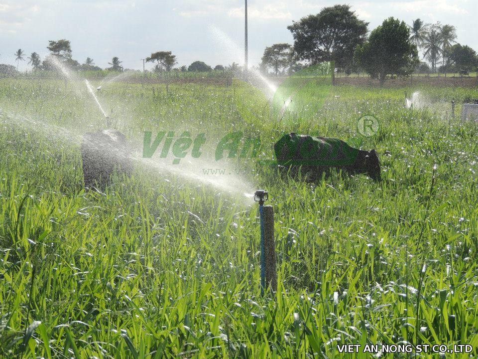 béc tưới cỏ lf2400 của mỹ bảo hành 5 năm