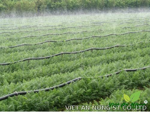 Dây tưới phun sương, dây tưới phun mưa, tưới hồ tiêu Đài Loan